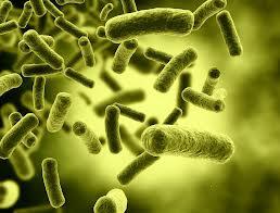 Les bacteries peuvent causer des infections !