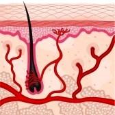Neogenese folliculaire et clonage capillaire.