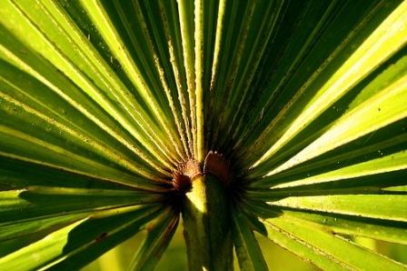 Les plantes offrent une solution naturelle contre la perte de cheveux.
